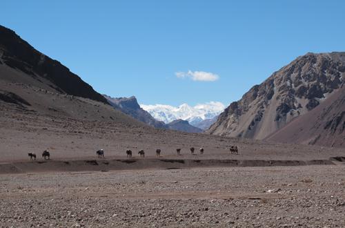 trekkingreise argentinien mit pferden